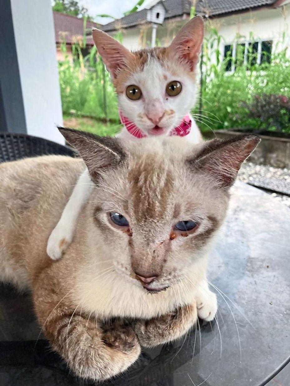 Blanket (behind) with its best friend, Meemaw.