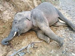 Sad week for endangered animals