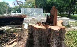 Felling of trees at Tanjung Aru raises rumours of mega project revival, but KK City Hall says it's for safety reasons
