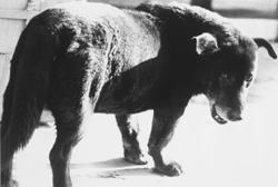 How you can take home Daido Moriyama's iconic 'Stray Dog'