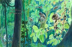 A new bilingual children's picture book tells the story of dusky langurs