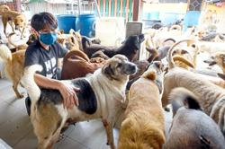 Pets too hit hard by prolonged pandemic