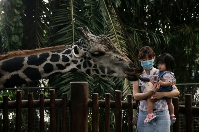 The operating capacity of attractions in Singapore has been reduced to 25 per cent, down from 50 per cent due to rise in locally transmitted in the country. - The Straits Times/ANN