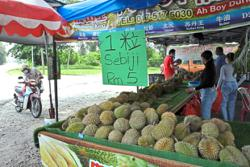 Durian picked up from orchards daily