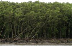 Malaysia needs to urgently commit to protecting and conserving mangrove forests