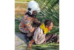 Man, 55, hurt after palm tree falls on him