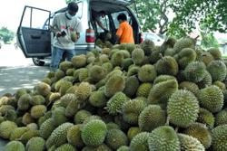 'Durian Mustaqim' portrays reality of durian business