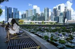 Singapore braces for a leap of faith in its Covid strategy