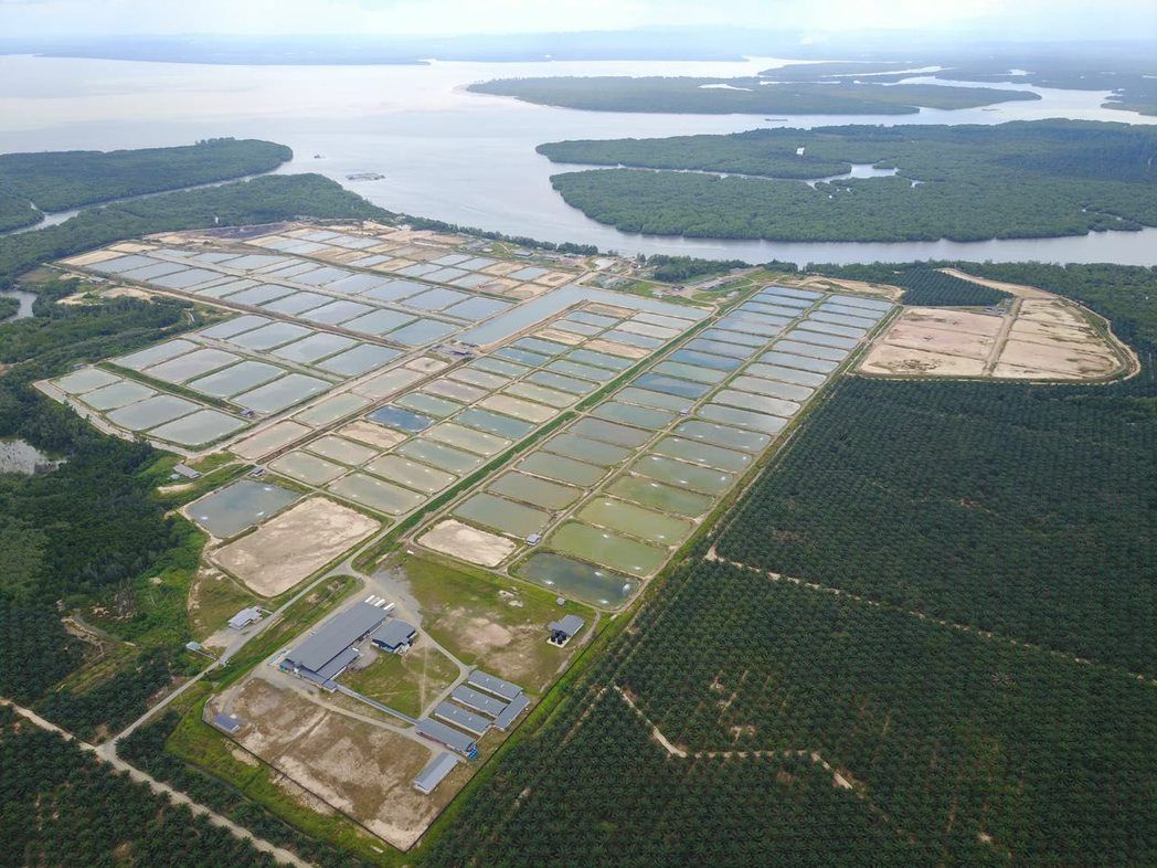 On July 15 this year, MAG Holdings had completed the acquisition of prawn aquaculture farm, North Cube Sdn Bhd which has 133 cultivation ponds and a prawn processing plant.