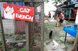 Shelter with 300 cats, including 100 sick ones, bursting at its seams