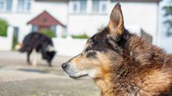 Giving older dogs a second chance at life