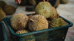 Police halt durian give-away in Parit Buntar for SOP violations