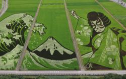 Watch: Japan's Ukiyo-e art and Kabuki culture come alive in a rice field