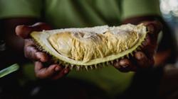 Biji Bumi Durian champions and sells delicious Orang Asli-grown durians