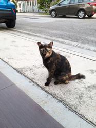 My Pet Story: Darling of our neighbourhood
