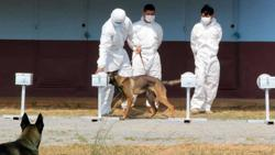 Cambodia succeeds in training dogs to sniff out Covid-19, says top official