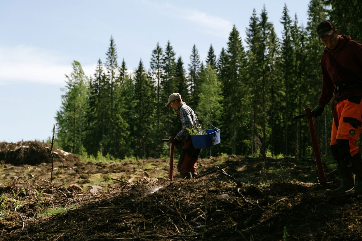 Forest workers are seen while planting new trees in a recently cleared part of forest belonging to the Orthodox Christian monastery Valamo. – Photo: AFP