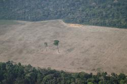 Bolsonaro's 'land grab' bill passes Brazil's lower house
