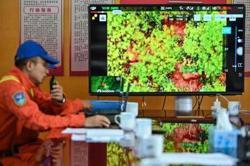 With drones and bananas, China coaxes wayward elephants home