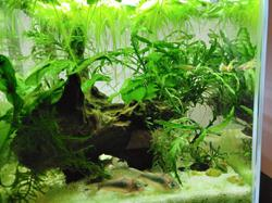 My Pet Story: Fishes are my pandemic distraction