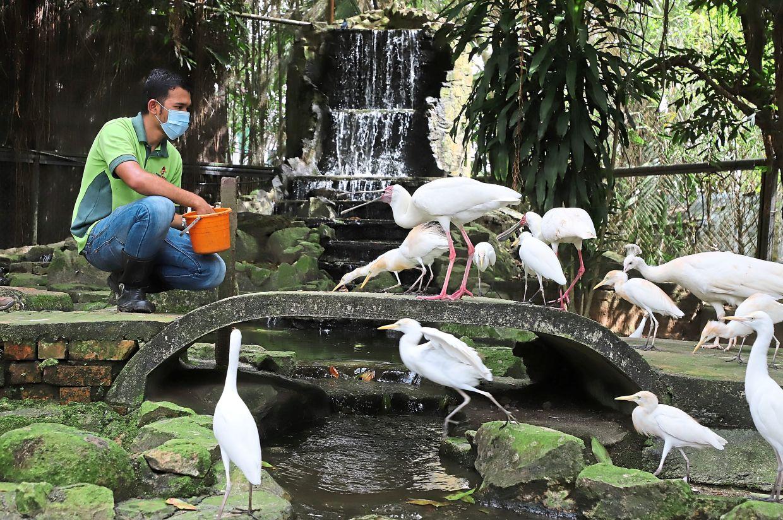 A staff member feeding birds inside a large aviary at Penang Bird Park in Seberang Jaya.