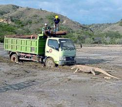 Unesco calls for project moratorium on Komodo National Park