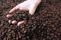 Insight - Retail coffee prices to climb as frost and freight costs bite