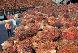 Malaysia end-July palm oil stocks slump to 4-month low as output shrinks