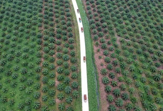 In a filing with Bursa Malaysia, the group, which owns and operates 10,280ha of oil palm plantations in Sabah, based on its website, noted that since hitting a 13-year high of close to RM5,000 per tonne in May 2021, CPO prices had retracted since then but rebounded to the current level of above RM4,000 per tonne.