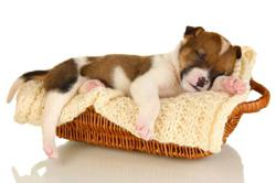 Dog Talk: Having your furry friends in the bedroom