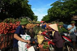 Vietnam July rice exports increasing, up 6.6% but coffee exports down 4.5% m/m