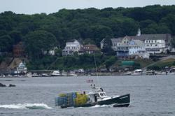 Lobster boat tracking coming to protect whales, fishery