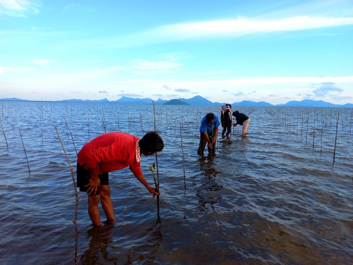 Mangrove ditanam oleh anggota masyarakat di Natuna, Provinsi Kepulauan Riau.  - Jakarta Post / ANN