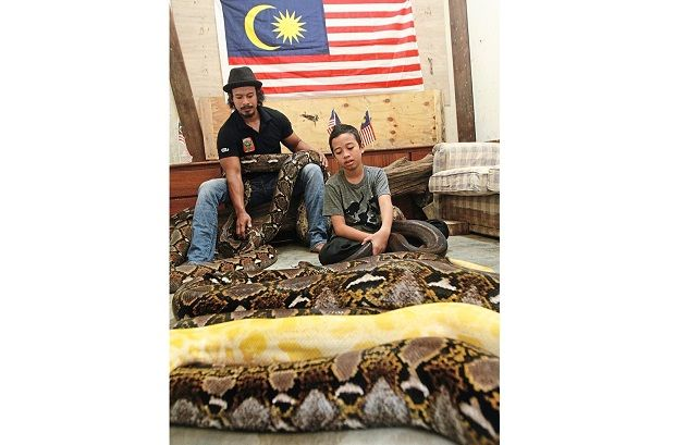 Teen to coil up with snakes for National Day | The Star