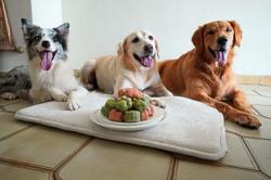 Dog-friendly mooncakes make a sweet charity treat