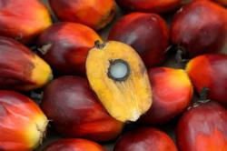 Bright Packaging in JV to develop oil palm estate in Sarikei