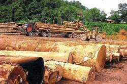Ta Ann optimistic of a turnaround in its timber operations