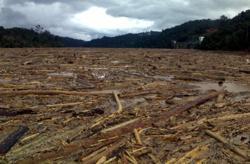 Sarawak govt urged to probe Rejang logjam after pollution shuts down Sibu's water treatment plants