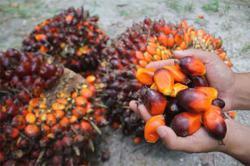 Hap Seng Plantations second-quarter net profit up