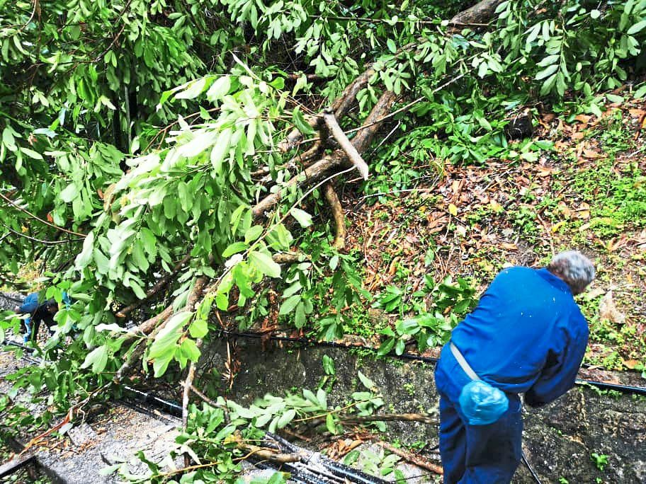 Penang Hill Corporation (PHC) staff cleaning some of the fallen trees at Penang Hill due to the heavy downpour.