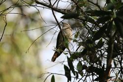 The 197ha Putrajaya Wetlands Park has over 200 species of birds now, thanks to comprehensive rehabilitation efforts