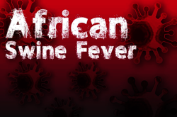 Research: Indigenous communities affected by African swine fever