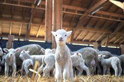 Animal welfare around the world