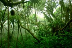 A third of global tree species threatened with extinction