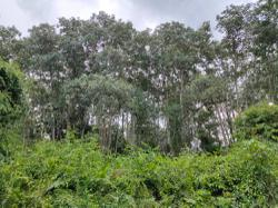 Degazettement of forest reserve to be further discussed at Selangor exco meeting, says state Pakatan leaders