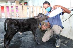 From engineer to dairy farmer in quest to follow passion