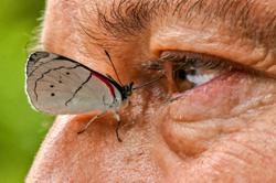 Juan Guillermo Jaramillo documents worlds largest variety of butterflies