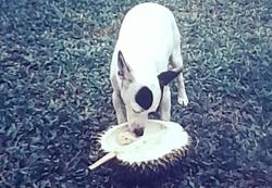 My Pet Story: The dog that loved to eat durian
