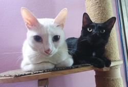 Katz Tales: Feline masterminds at work, using stealth, audacity and cunning