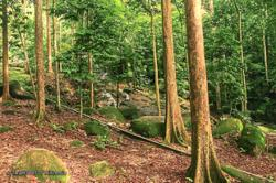 Planting trees most effective strategy to reduce effects of climate change, says FRIM